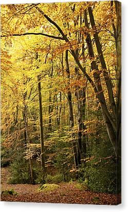 Autumnal Woodland Iv Canvas Print by Natalie Kinnear