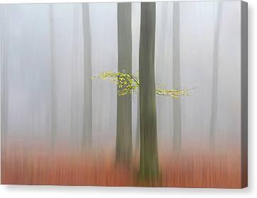 Autumnmorning Canvas Print