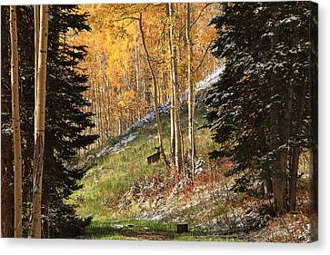 Autumn's Blessing Canvas Print by Gene Praag
