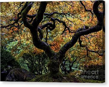 Autumn's Canopy Canvas Print by Mike Dawson