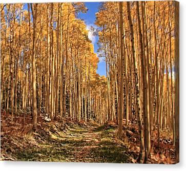 Autumn's Embrace Canvas Print by Gene Praag