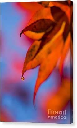 Autumn's Finest Canvas Print by Anne Gilbert