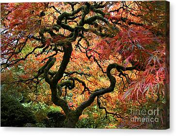 Autumn's Fire Canvas Print