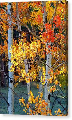 Autumn's Fire Canvas Print by Jim Garrison