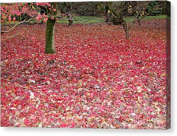 Canvas Print featuring the photograph Autumn's Gift by Linda Prewer