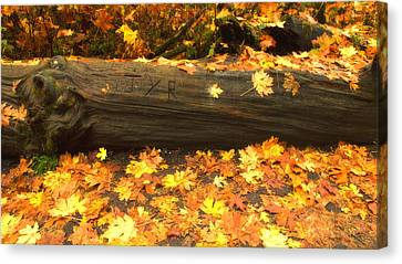 Autumn's Gold Canvas Print