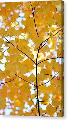 Autumn's Golden Leaves Canvas Print by Jennie Marie Schell
