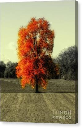 Autumn's Living Tree Canvas Print