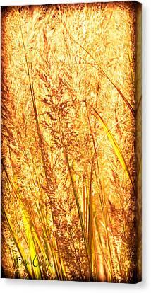 Autumns Passion Canvas Print by Bob Orsillo