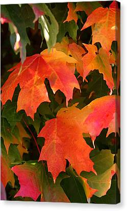 Autumn's Peak Canvas Print by Paula Tohline Calhoun