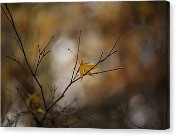 Autumns Solitude Canvas Print by Mike Reid