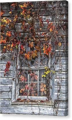 Autumn's Window Curtains Canvas Print