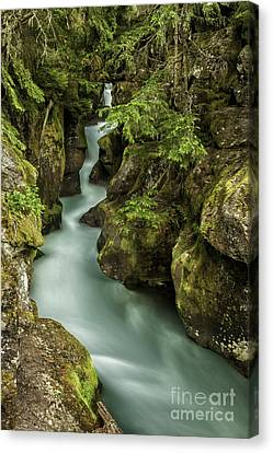 Avalanche Creek - Glacier National Park Montana Canvas Print by Thomas Schoeller
