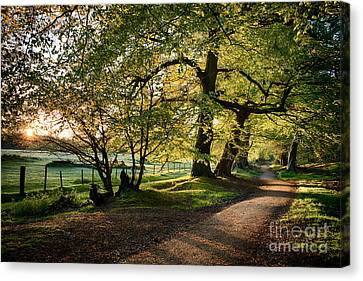 Early Spring Canvas Print - Avenue Of Light by Tim Gainey