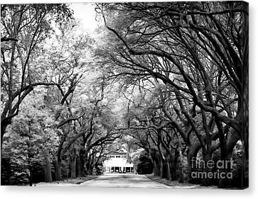 Avenue Of Oaks Canvas Print by John Rizzuto