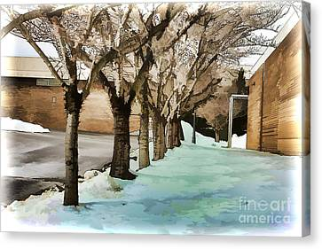 Avenue Of Plane Trees Canvas Print by Terry Weaver