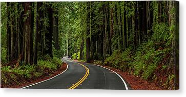Giant Sequoia Canvas Print - Avenue Of The Giants Passing by Panoramic Images