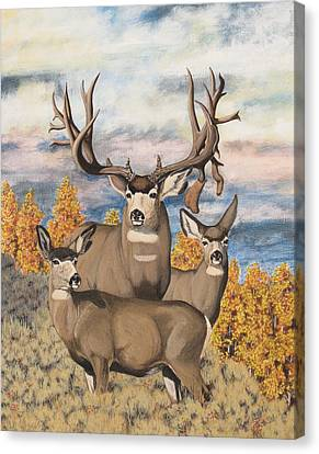 Avery Buck Canvas Print
