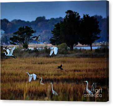 Aviary Convention Canvas Print by Robert McCubbin