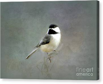 Awaiting Spring Canvas Print by Brenda Bostic
