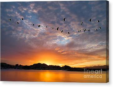 Awakening Canvas Print by Alice Cahill