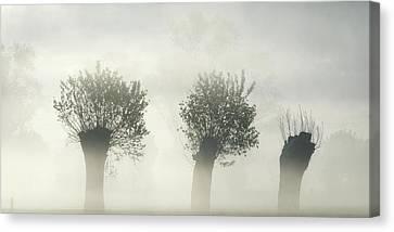 Haze Canvas Print - Awakening Earth by Piet Flour