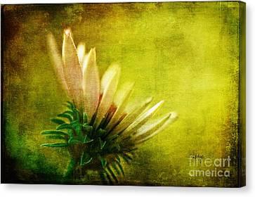 Awakening Canvas Print by Lois Bryan