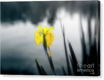 Awakening Canvas Print by Scott Pellegrin