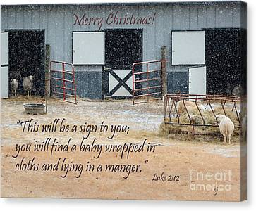 In A Manger Canvas Print by Nava Thompson