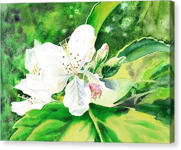 Awesome Apple Blossoms Canvas Print by Irina Sztukowski
