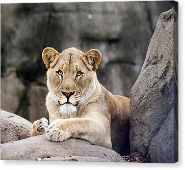Awesome Cat Canvas Print by Tammy Smith
