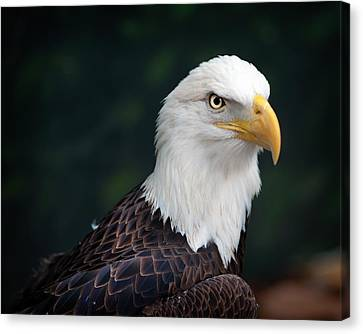 Awesome Eagle Canvas Print by Tammy Smith
