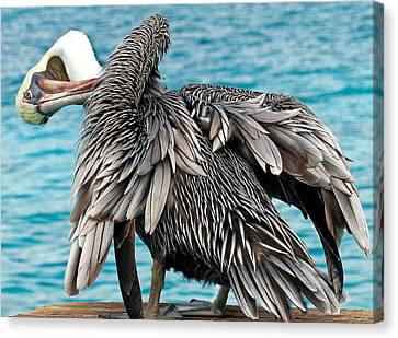 Awkward Pelican Canvas Print by Jean Noren