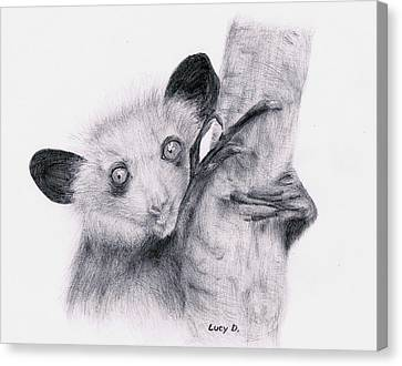 Aye-aye Canvas Print by Lucy D