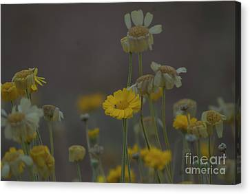 Canvas Print featuring the photograph Az Flowers by Rod Wiens