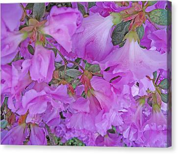 Azalea Abstract Canvas Print