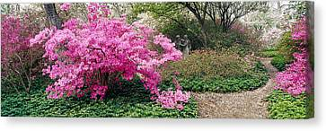 Garden Scene Canvas Print - Azalea Flowers In A Garden, Garden by Panoramic Images
