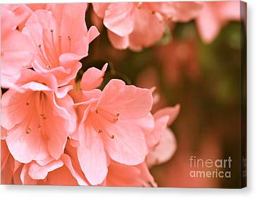 Azalea Victorian Canvas Print by Cathy Dee Janes