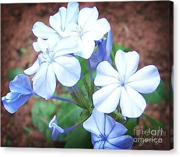 Azure Aura Canvas Print