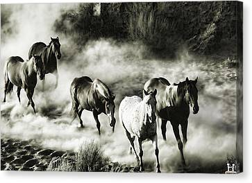 B And W Hosses Canvas Print
