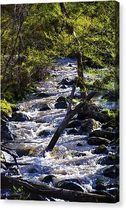 Babbling Brook Canvas Print by Bill Cannon