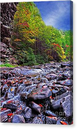 Babbling Brook Canvas Print by Dawn Gari