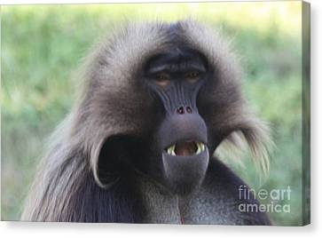 Canvas Print featuring the photograph Baboon by John Telfer
