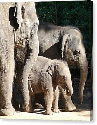 Baby Asian Elephant Socialising Canvas Print by Margaret Saheed