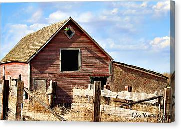 Canvas Print featuring the photograph Baby Barn by Sylvia Thornton