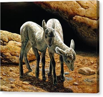 Bighorn Sheep Canvas Print - Baby Bighorns by Crista Forest