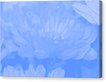 Baby Blue 1 Canvas Print by Carol Lynch