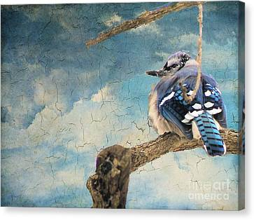 Baby Blue Jay In Winter Canvas Print by Janette Boyd