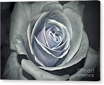 Canvas Print featuring the photograph Baby Blue Rose by Savannah Gibbs
