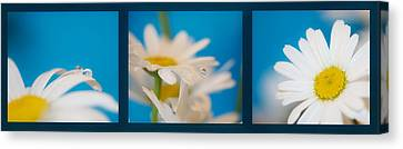 Baby Blue Triptych Canvas Print by Lisa Knechtel